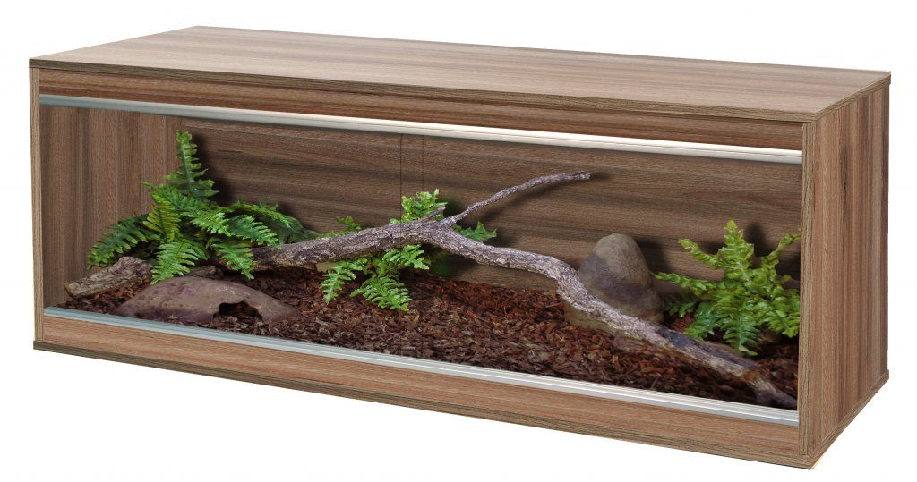 Bearded Dragon Vivarium Size, Temperature, Setup